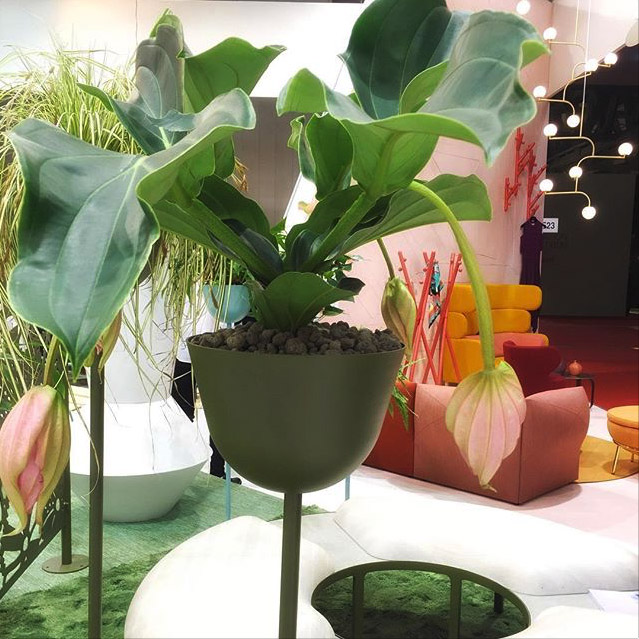 Växt i grön kruka på utställning omsvensk design, möbler och mode.